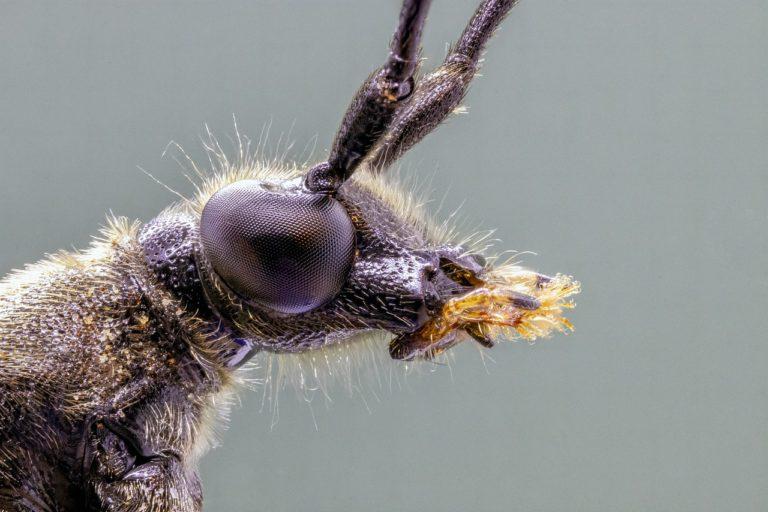 Jak pozbyć się uciążliwych karaluchów z naszego domu?