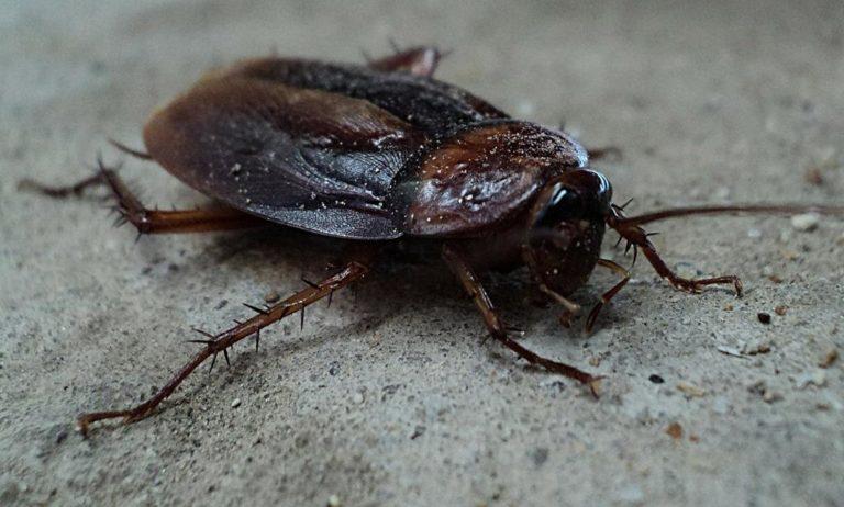 Jak raz na zawsze pozbyć się insektów z domów i mieszkań?
